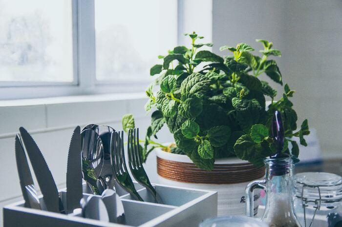 料理の風味付けや彩りにも使え、癒しのインテリアにもなる、何かと便利なキッチン菜園。自家製のハーブを使ったメニューはおいしさもひとしおです。