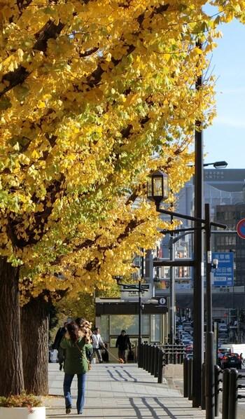 この通りの見どころは、春の桜と秋のイチョウ。皇居周辺をお散歩するならぜひ押さえておきたいスポットです。