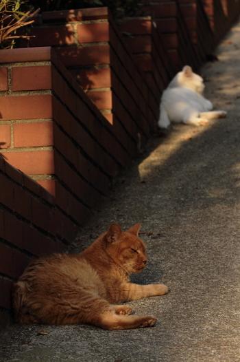 「夕焼けにゃんにゃん」とも呼ばれるほど、猫が多い「夕焼けだんだん」。のんびりくつろぐ猫さんを見て癒されちゃいましょう。