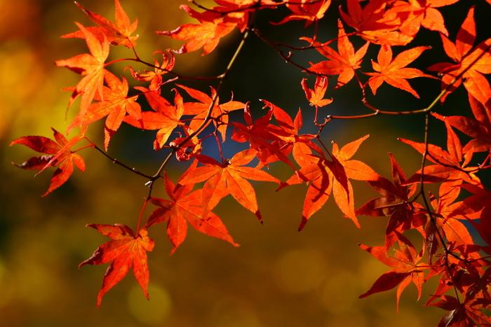"""""""スポーツの秋"""" ビギナーさんへ。この秋はじめたい!おすすめの運動【5選】"""