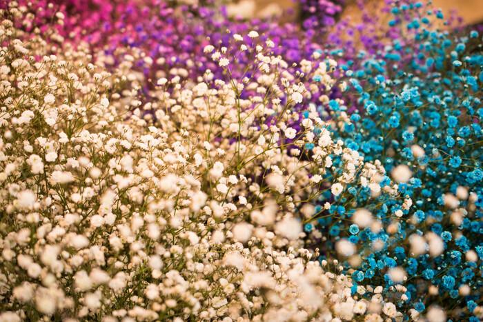 【開花時期】 5月~7月  【色の種類】 白、ピンク、青、紫など  【花言葉】 清らかな心、無邪気、親切、幸福、永遠の愛、純潔、感謝