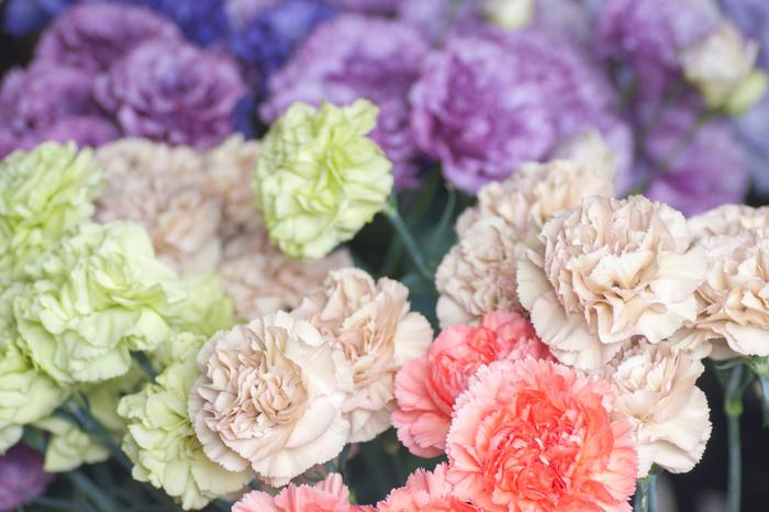 レースのような可愛らしい花びらが特徴のカーネーション。母の日に定番の赤いカーネーションのイメージが強いですが、色によって様々な意味を持ちお相手に合わせて選びやすいんです。 例えば「誇り」という意味を持つ紫色を自分に贈ったり、お相手の幸せを願って青色を贈るのも良いですね。黄色もとてもキレイなのですが、「軽蔑」という意味もあるのでプレゼントには向いていないかもしれません。