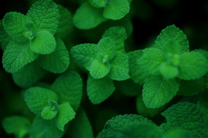 清涼感のあるミントの香りはクールダウンしたい時にぴったり。ローズマリーには頭をクリアにして集中力を高める効果、クラリセージには心と体のバランスを整える効果が有名です。
