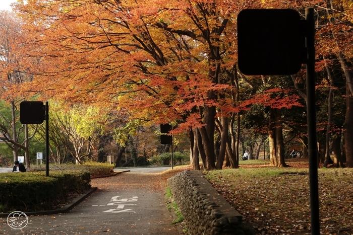 原宿駅から歩いて3~4分のところにある代々木公園も、定番の紅葉スポット。通りの両側に並んでいるのは、広葉樹のケヤキ。秋が深ると赤やオレンジ色のグラデーションが美しく、絵画を眺めているような贅沢な時間を過ごせます。