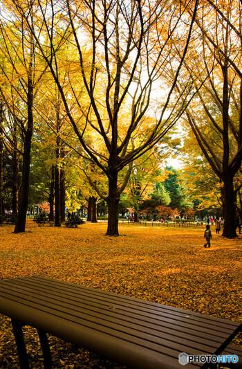 原宿門の右側に広がるイチョウ並木は、11月下旬~12月上旬が見頃です。紅葉を眺めながら、ベンチに座ってゆっくり読書というのも良いですね。
