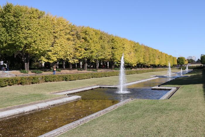 JR立川駅から歩いて10分ほどのところにある国営昭和記念公園。ここには2カ所のイチョウ並木があり、こちらは 水路に沿ってまっすぐ並ぶ106本のイチョウが美しい「カナールイチョウ並木」です。噴水は大小5つあり、水の流れの変化も楽しめます。