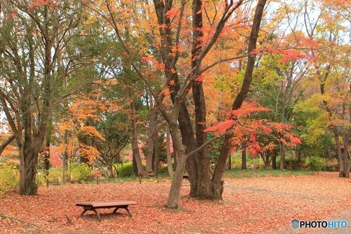 園内には、真っ赤なモミジのじゅうたんも。ベンチに座っておしゃべりをしたり、撮影したりと思い思いの時間を過ごしてみませんか?