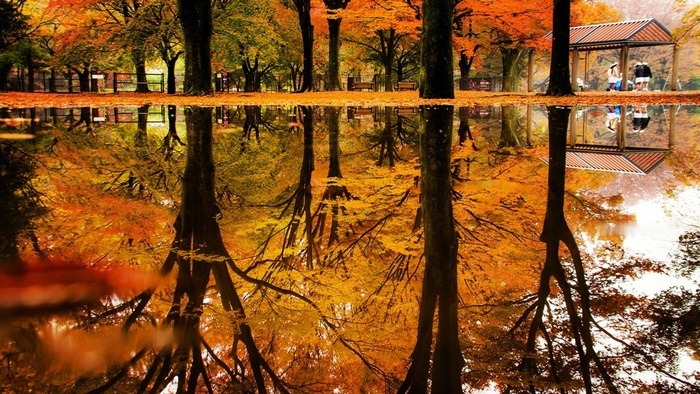 紅葉を映した雨あがりの水たまりも幻想的。公園を歩いていると、いろいろな秋の姿に出合えそう。