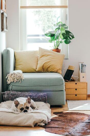 1人だとちょっと大きいくらいのソファには、クッションを2つ並べて包み込まれるような空間へシフト!ペールグリーンのソファに淡いイエローのクッションが相性抜群です。