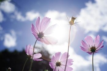 まだまだ残暑のきびしい日もありますが、風に秋の気配を感じる今日このごろ。空気も澄んできて、夕暮れの空はひときわ美しいです。  少しずつ、少しずつ短くなっていく日照時間に、少し切なさをおぼえる季節になりました。