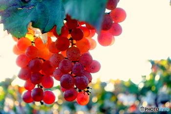 でも、次の「秋」は実りの季節。  夏の日差しをたっぷりと浴びてすくすくと育った、秋の味覚がおいしい季節の到来です♪