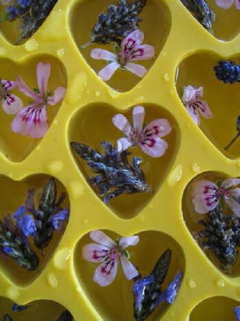 お花を氷で閉じ込めた、ラベンダーとゼラニウムのアイスキューブ。ミネラルウォーターに入れたら、ほのかに香り、とても可愛い♪