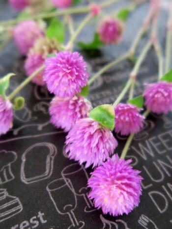 どんなお花も、ドライフラワーにすることで少し色が褪せてしまいます。でもその褪せた感じがドライフラワーの魅力でもあり、春や夏のお花を秋冬の雰囲気に変えてくれるから不思議なんです。