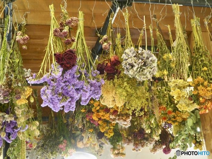 ショップやショールームはもちろん、オンラインショッピングでも様々な種類のドライフラワーが購入できる「東京堂」さん。定番のお花から、枝ものなど、とにかく種類が豊富なのが魅力のお店です。ドライになっている状態を見られるので、色あせ感なども含めてお気に入りを探してみてくださいね。