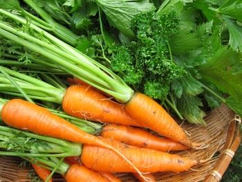 年中出回っているにんじんですが、実は秋が旬なんです。緑黄色野菜であるにんじんにはカロテンが豊富に含まれていて、肌の健康を保ったり、風邪の予防に役立ったりする効果が期待できます。