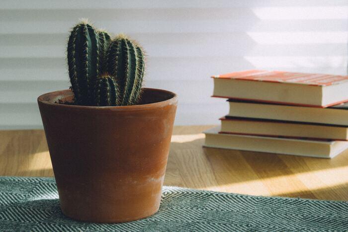 読書習慣をはじめてみると、自分の中で起こる変化にそのうち気が付くでしょう。新しい知識が増えたり、いつの間にか集中力がアップしたり、本を読むことで得られる変化を楽しむのは読書の醍醐味のひとつです。自分が心からリラックスできる環境を作って、秋の読書をたっぷり満喫しましょう♪