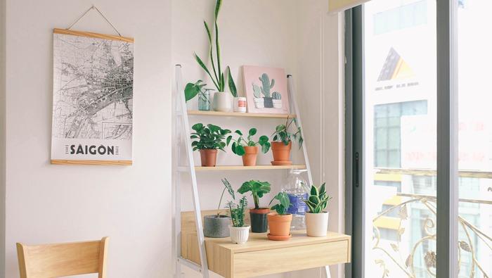 おうちにぴったりな観葉植物はどれ? 種類別「ベスト」な選び方教えます!