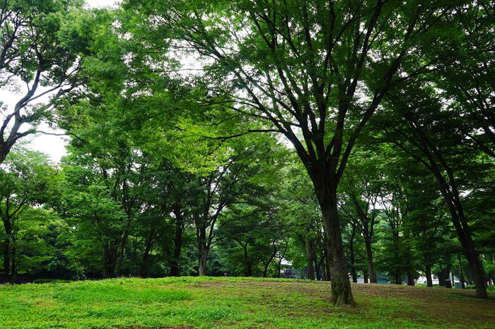 """「上野公園」は、""""公園""""といっても、美術館や博物館、動物園などに意識が向いてしまうためか、文化施設に緑地や遊歩道が付帯したものとイメージしてしまいます。【ウエストサイドエリア内の緑地】"""