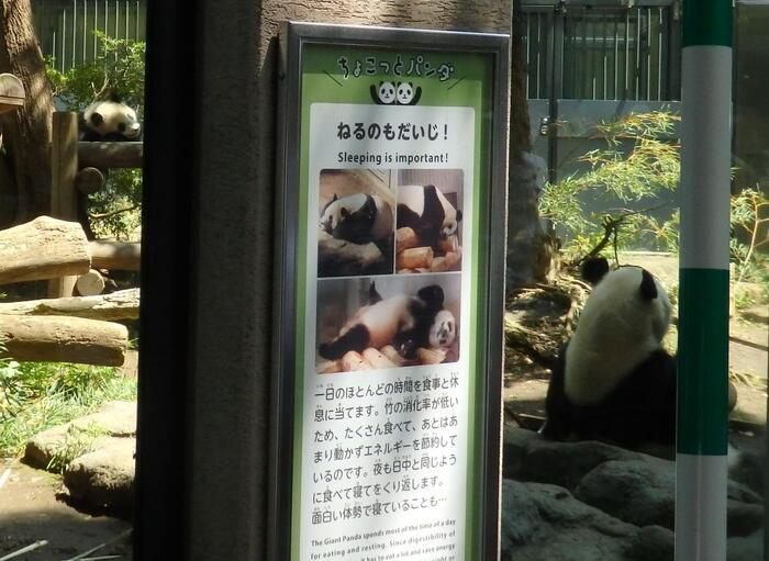 人間も動物。自然のサイクルに従って生きる必要があるのは、パンダと何ら変わりません。休日位は、積極的に何かを成そうと気張らず、身体を解すように歩き、身体の声に従って気ままに過ごしましょう。  【2018年6月12日、シャンシャン満1歳誕生日時の「上野動物園」パンダ舎の親子。】