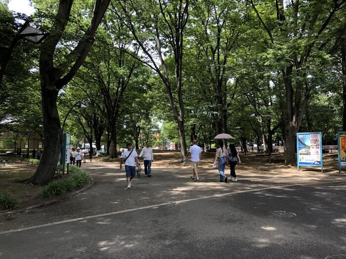 """文化施設が集結する場であっても、ここ「上野公園」は、自然豊かな広大なる都市公園です。  記事で紹介したように、上野公園の""""ウエストサイドエリア""""は、木々高く、緑豊か。水辺の景色は、心和み、歩道はゆったりと広やかです。  名所や立ち寄りスポット、喫茶店や甘味処も、ここかしこに点在し、飽きずにのんびり過ごせます。近現代の古き良き時代の雰囲気も色濃く残り、落ち着いた風情も楽しめます。記事を参考に、ぜひあなたらしい""""気ままな散歩""""を楽しんで下さい。【「奏楽堂」近くの園内遊歩道】"""