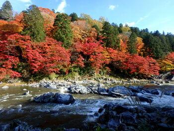 足助町一番の観光名所でもある「香嵐渓(こうらんけい)」には、イロハカエデやオオモミジなど、11種類の楓が植えられているといわれ、秋には素晴らしい紅葉を楽しむことができます。