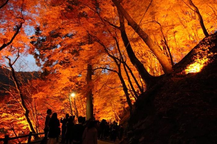 一面の紅葉は時間帯や天気によってかなり印象が変わるため、秋になると写真を趣味とする方やプロの写真家も訪れ、たくさんの美しい写真が残されています。11月になると夜になっても紅葉が楽しめるようにライトアップが行われるため、幻想的で厳かな雰囲気に包まれます。