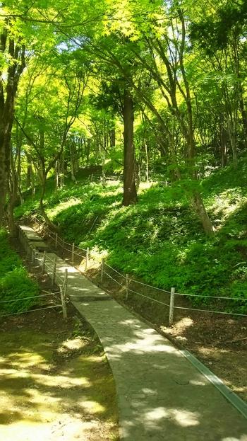 飯盛山(はんせいざん)は香嵐渓の近くにある標高254メートルの小さめの山となっており、気軽登山を楽しめるスポットです。豊かな自然を感じながら、マイナスイオンをたっぷり浴びつつ気持ちよく歩くことができますよ。