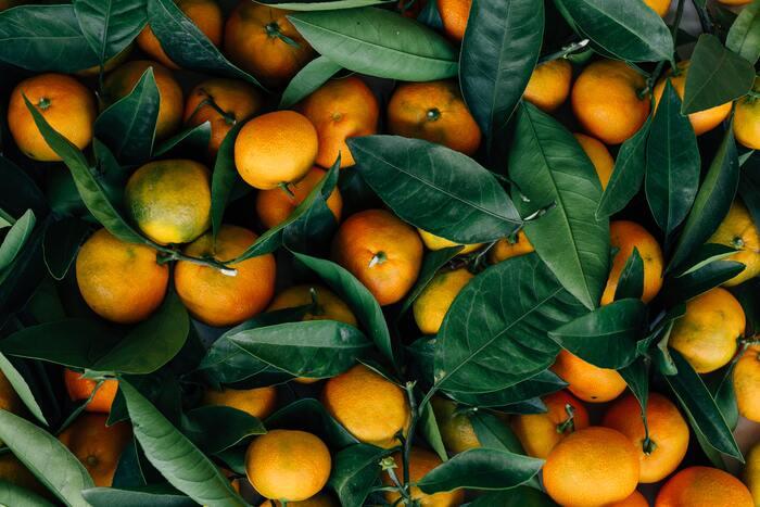 オレンジやグレープフルーツの香りは気持ちを明るく前向きにしてくれる効果があります。一方レモンは頭をクリアにして、集中力を高めてくれます。
