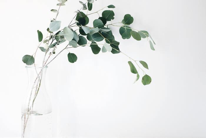 クリアなユーカリの香りはリフレッシュして集中したい時に、ティーツリーはツーンとした香りで浄化する効果があります。