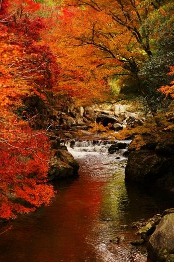 香嵐渓へ訪れる方は大変多いですが、神越渓谷でも美しい紅葉を鑑賞することができます。水の音に耳を傾けながら、心安らぐひと時を味わえます。