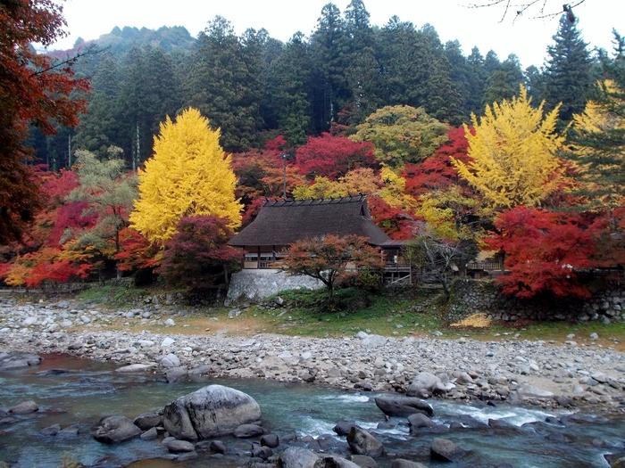 足助で毎年11月いっぱい開かれるのが「香嵐渓もみじまつり」です。紅葉が一番美しい時期で、たくさんの人が訪れます。土日にはお囃子や太鼓の演奏会、お茶会など様々な催し物が行われます。