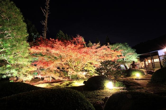 紅葉の時期には毎年夜間のライトアップが行われます。2019年は11月17日から11月24日に行われる予定です。