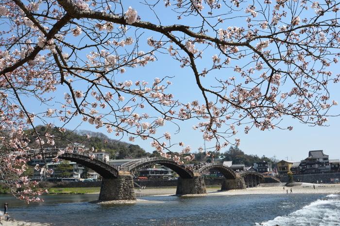 周辺は桜の名所としても知られ、秋には紅葉も楽しめます。四季折々の表情を見せてくれるおすすめのスポットです。