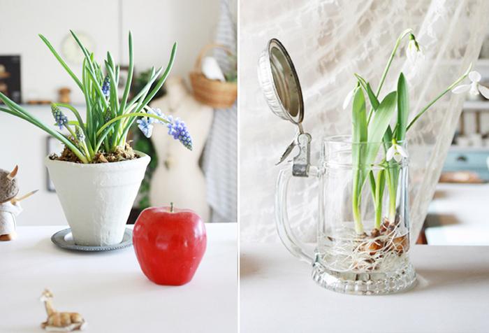 鉢植えや水栽培で楽しめる球根花。かわいい鉢に植え替えたり、水栽培用の素敵な入れ物を用意して贈ってみるのもおすすめです。つぼみの状態なら、咲くまでの過程も楽しめますよ。