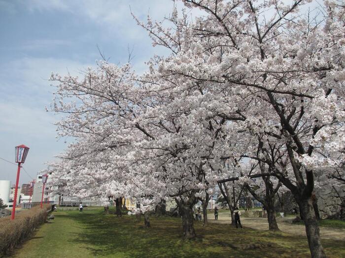 盛岡市民の憩いの場、盛岡藩20万石の居城であった盛岡城の旧跡を訪れましょう。こちらは昭和31年に、公園として整備されました。  北上川と中津川を外堀としており、お花見シーズンには、美しい桜の景色を楽しめます。子供連れのファミリーにも、思いっきりリフレッシュできる遊び場所になるはず。