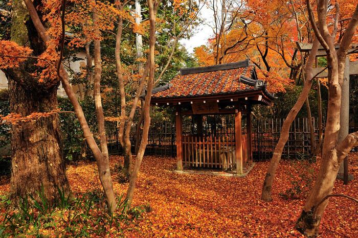こじんまりとしたお寺ですが、境内にも楓がたくさん植えられているので、庭園以外の紅葉も楽しめますよ。