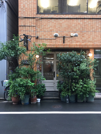 老舗のカフェが軒を連ねる本の街、神保町。その一角にグリーン溢れた隠れ家的お店が今回オススメする「カフェ・デ・プリマベーラ」です。