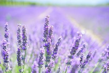 好きな香りのフレグランスなどがあれば、便箋やカードに、その仄かな香りを添えてみてはいかがでしょう。  香り付けは、女性らしい印象を与える、素敵な気遣いになりますよ。