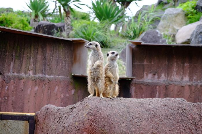 広い敷地には、チンパンジーやナマケモノなど約140種類の動物がいて、それぞれ工夫を凝らした展示が行われています。お気に入りの動物をゆっくり眺めるのも良いですね。
