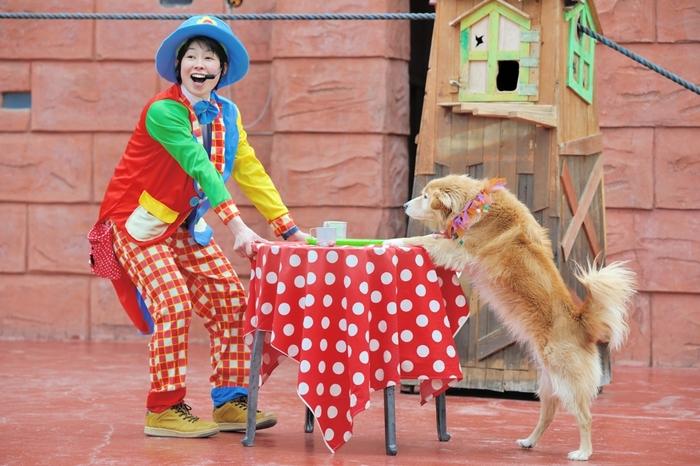 1日に数回行われる「アニマルショー」では、動物の意外な能力に驚いたり、司会者との軽妙なやり取りを楽しめます。1日たっぷり遊べますからここを目当てに東伊豆を訪れても良いですね。