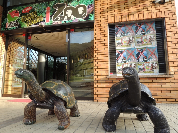 熱川の少し先にある「iZoo(イズー)」は、日本最大規模を誇る爬虫類・両生類の動物園。ちょっと怖いイメージをもつ方が多いかも知れませんが、誰もが思わず夢中になってしまうような展示方法が人気です。また、館内案内図がないのも特徴で、訪れるたびに常に新化する展示を楽しめます。