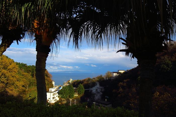 「熱川バナナワニ園」は、本園・ワニ園、本園・植物園、分園と3つのエリアに分かれています。本園・植物園と分園の行き来は無料のバスがあるので、ぜひ利用しましょう。高台からは遠くに伊豆大島を眺めることもできますよ。
