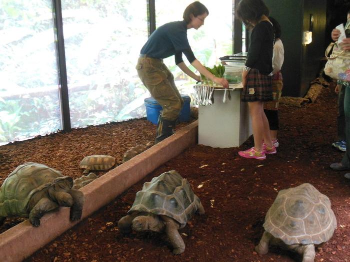 ゾウガメにはエサやりもできます。 のんびり歩いてくるカメたちに青菜を差し出すと、モシャモシャと食べてくれますよ。