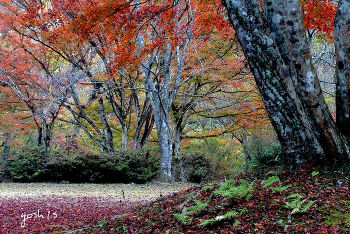 花貫川沿いを東に進むとある名馬里ヶ淵。大きなモミジの木が広場のシンボルです。周囲の滝や川と合わせて、マイナスイオンをたっぷり浴びれる癒やしスポットですよ。