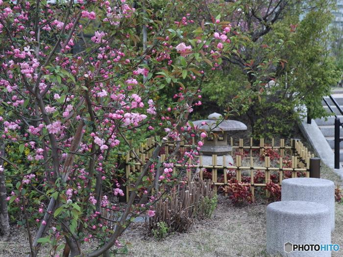 ドーナツ型の庭園は11のエリアに分かれていて、各所には約30種類の樹木や花が植えられています。「くつろぎの広場」には、こんな日本庭園もあり和の風情を感じられます。