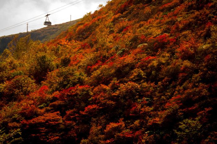 那須岳は茶臼岳の別名です。周辺の朝日岳や三本槍岳も含めて呼ばれることもあります。那須の中でも特に美しい紅葉が見られるんですよ。登山ルートは初心者でも登りやすいので、チャレンジしてみてはいかがでしょう?ロープウェイから見下ろす一面の紅葉は、まさに絶景です!