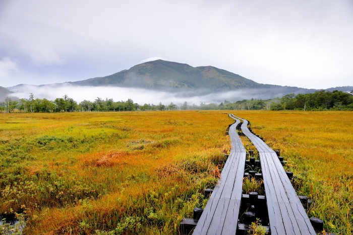 周囲を山々に囲まれた湿原には、貴重な自然が溢れています。まるで別世界に来たようですね♪9月中旬頃から草紅葉が始まり、一面黄金色に輝きます。木の紅葉とはまた違った美しさがありますよ。その後を追いかけるように、樹木が色付き始めます。