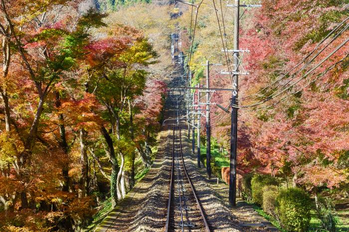 清滝駅から高尾山駅までを結ぶケーブルカー。山頂まで楽に行くことができますよ。道中では左右から迫って来るような、色とりどりの紅葉がお出迎え!絶景を眺めていると、あっという間に到着します。