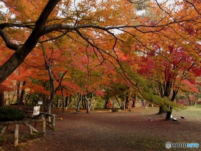 荒川が流れる自然豊かな観光地、長瀞。紅葉は11月上旬から下旬にかけて見頃を迎えます。それに合わせて町内では様々なイベントが開かれ、絶景ポイントがいくつもあります。紅葉巡りをするのも楽しいですよ♪