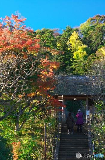 北鎌倉の花の寺としても有名な「東慶寺」でも座禅をはじめ写経、茶道、挿し花、香道を体験することができます。
